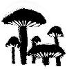 100x100-fungi